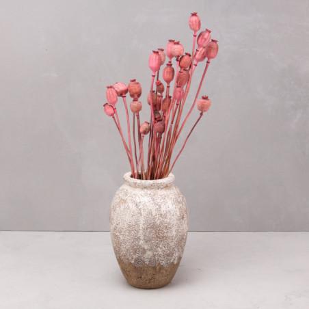 Papaver seco rosa (mazo)