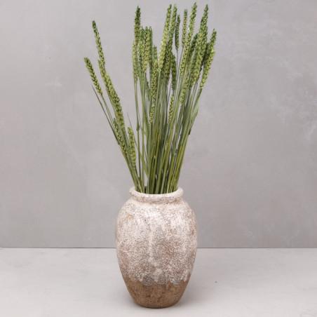 Trigo seco verde (mazo)