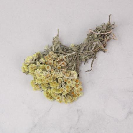 Anaphalis seca amarilla (mazo)