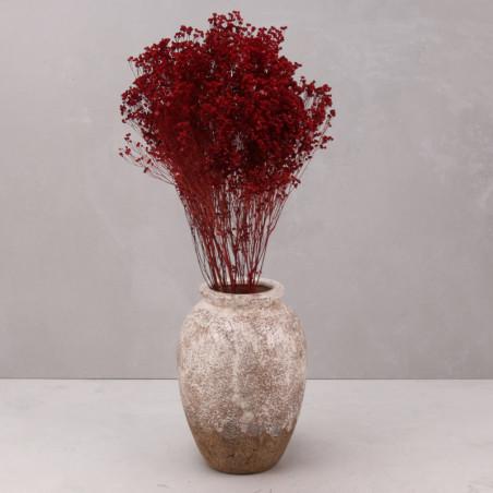 Broom bloom seco rojo (mazo)
