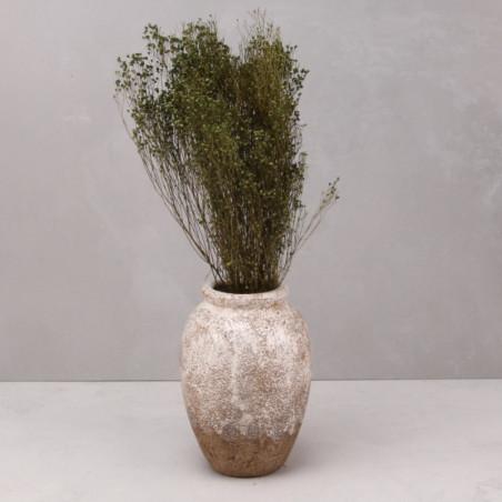 Broom bloom seco verde (mazo)