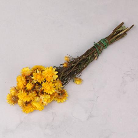 Helichrysum seco amarillo...